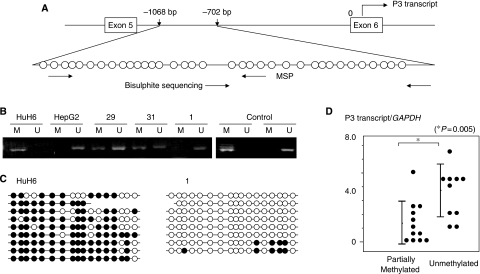(A) Diagram of the IGF2 P3 promoter region. Individual CpG dinucleotides located upstream of exon 6 (from −1068 to −702 bp) are represented by circles. Horizontal arrows indicate locations of PCR primers used for MSP and bisulphite sequencing. (B) Examples of the promoter methylation status using methylation-specific PCR. Polymerase chain reaction products of methylated or unmethylated P3 promoters from HB tumours are shown. Numbers above horizontal bars indicate the tumour number. M, methylated promoter; U, unmethylated promoter. (C) Bisulphite sequencing analysis of the methylation status of P3 promoter in HuH6 and one tumour (no. 1), which displayed complete methylation and complete unmethylation, respectively. Open and closed circles indicate unmethylated and methylated CpG dinucleotides, respectively. (D) Levels of P3 transcripts in tumours with partially methylated P3 promoter and tumours with unmethylated P3 promoter.