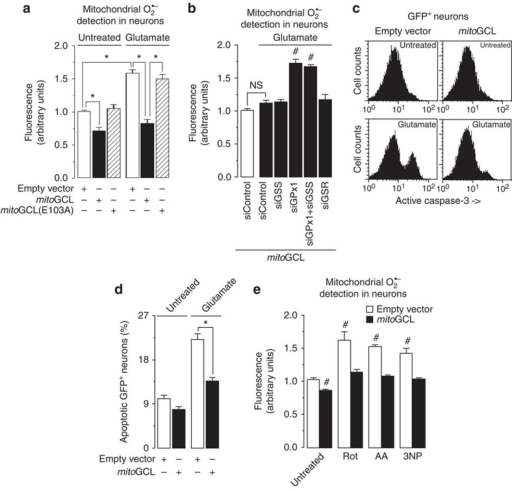 mitoGCL down-modulates mitochondrial superoxide in primary neurons.(a) Transfection of rat primary neurons with mitoGCL, but not with its inactive form (mitoGCL (E103A)), significantly decreased basal levels of mitochondrial O2·–, as quantified by MitoSox fluorescence in the transfected neurons (identified by GFP+ fluorescence); mitoGCL—but not mitoGCL (mut)—fully prevented glutamate (100 μM per 5 min)-induced mitochondrial O2·–, as quantified 24 h after glutamate treatment, by MitoSox fluorescence. (b) Silencing glutathione peroxidase-1 (siGPx1), but not glutathione synthetase (siGSS) or glutathione reductase (siGSR), significantly enhanced glutamate (100 μM per 5 min)-mediated mitochondrial O2·–, as judged by MitoSox fluorescence 24 h after treatment, in mitoGCL-expressing neurons; such enhancement was not affected by GSS co-silencing. (c) Expression of mitoGCL rescued the increase, observed after 24 h, in active caspase-3 in GFP+-neurons triggered by glutamate (100 μM per 5 min), as assessed by flow cytometry. (d) mitoGCL expression prevented neuronal apoptotic death, as revealed by annexin V+/7-AAD− neurons 24 h after glutamate treatment (100 μM per 5 min). (e) mitoGCL expression prevented the increase in mitochondrial O2·– (as assessed by MitoSox fluorescence) caused by incubation of neurons with rotenone (Rot, 10 μM), antimycin A (AA, 10 μM) or 3-nitropropionic acid (3NP, 2 mM) for 15 min. NS, not significant; *P<0.05; #P<0.05 versus untreated (analysis of variance; n=3 independent culture preparations). All data are expressed as mean±S.E.M.