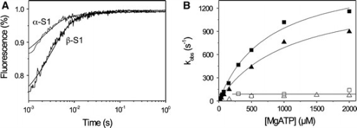 ATP-binding to actin·S1 (α- or β-isoform). The ATP-binding properties of the recombinant human α- and β-S1 proteins with actin present were investigated using stopped flow measurements. a After rapidly mixing 0.5 mM ATP with 0.1 μM pyrene-actin·S1, for both cardiac S1 isoforms the pyrene fluorescence transient is best described by a two exponential fit. For the fast phase, the observed rate constant was (kobs) = 658 s−1 (amp = 21%) for α and kobs = 436 s−1 (amp = 31%) for β, whereas for the slow phase, a similar kobs was found for both isoforms, kobs = 61 s−1 (amp = 2.2%) for α and 64 s−1 (amp = 5%) for β. b For both α- and β-S1 the kobs of the fast phase showed a hyperbolic dependence on ATP concentration. At high [ATP], kobs for the fast phase (=  ) saturates at 1,667 for α (filled square) and at 1,432 s−1 for β (filled triangle) with a half maximal kobs at 769 and 1,075 μM ATP (= 1/) for α and β, respectively. The slower phase is virtually independent of ATP concentration k+α1 = 40–60 s−1 for both α (open square) and β (open triangle)
