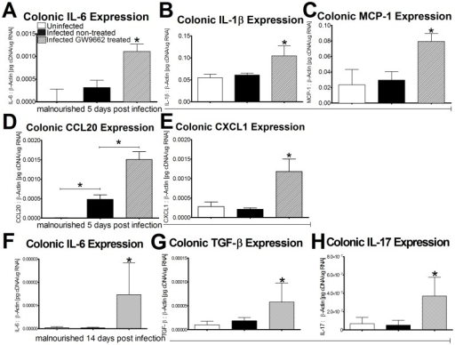 Gene expression suggests a T helper 17 response in mice when peroxisome proliferator-activated receptor γ (PPARγ) is antagonized.Gene expression data from colonic tissue of malnourished C57BL/6 mice was analyzed using quantitative real-time RT-PCR and reported as values normalized to β-actin. IL-6, IL-1β, MCP-1, CCL20, and CXCL1 were quantified at day 5PI (mice per group: n = 10) (A–E) while IL-6, TGF-β, and IL-17 were quantified 14 days PI (n = 10) (F–H). Asterisks indicate values where differences are statistically significant (p<0.05) while bars connect groups where comparisons are made.