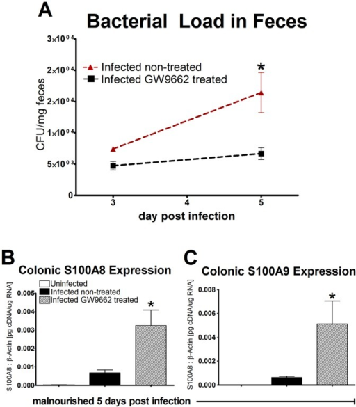 Pharmacological blockade of peroxisome proliferator-activated receptor γ (PPARγ) associated with antimicrobial response and bacterial clearance.Enteroaggregative Escherichia coli (EAEC) burden in colon was assessed by quantitative real time RT-PCR using bacterial DNA isolated from feces of infected mice treated with PPARγ antagonist GW9662 (n = 9) or left untreated (n = 9). Data is presented as CFU/mg of tissue. S100A8 and S100A9 gene expression was analyzed in colonic tissue from C57BL/6 malnourished mice at day 5 days PI (n = 10) using quantitative real-time RT-PCR (B and C). S100 proteins are presented as values normalized to β-actin. Asterisks indicate values where differences are statistically significant (p<0.05).