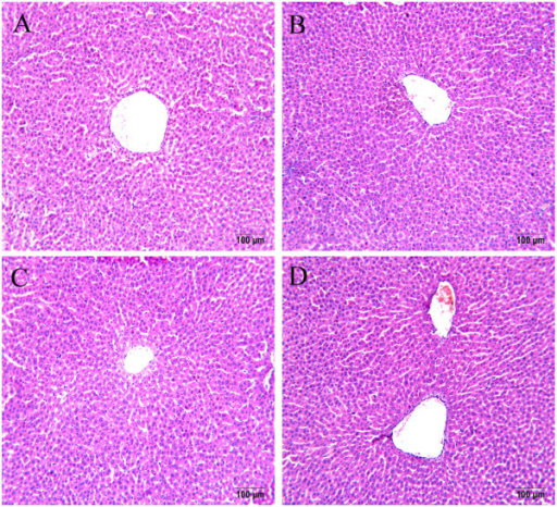 Histopathological examination of liver sections from rats treated with TAE from YHS. Liver sections of male Sprague–Dawley rats treated with various dosages of TAE showed largely normal appearances. For each dosage group, four sections were made, and the microphotos show representative foci in the control rats (A), 6 mg/kg (B), 30 mg/kg (C), and 150 mg/kg (D) TAE-treated rats. Tissues were fixed in formalin and stained with hematoxylin and eosin. Magnification: 200 × .