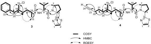 Most significant correlations provided by the COSY, HMBC and ROESY 2D NMR spectra of smenothiazole A (3) and B (4).