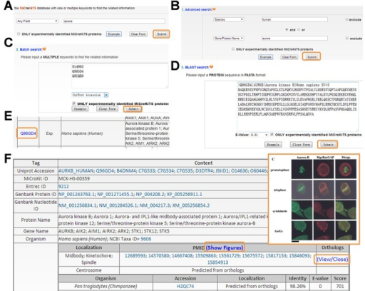 The search options of MiCroKiTS database. (A) The database can be directly queried with one or multiple keywords. (B) The 'Advanced search' option allows users to submit a combination of two terms for searching. (C) The database could be searched to retrieve a list of proteins through submitting a list of keywords such as UniProt accessions. (D) The database can be queried with a protein sequence in FASTA format to find identical or homologous proteins. (E) The protein list derived from the search options. (F) The details of the MiCroKiTS protein Aurora kinase B in H. sapiens, while the fluorescence microscope figure for the localizations can also be visualized.