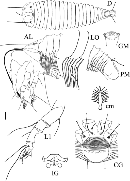 Schematic drawings of Rhyncaphytoptusfuyuniensis sp. n.: AL Lateral view of anterior body region CG Female coxigenital region D Dorsal view em Empodium GM Male genital region IG Internal female genitalia LO Lateral view of annuli and setae dL1 Leg I PM Lateral view of posterior opisthosoma. Scale bar: 15 µm (D); 10 µm (AL, CG, IG, GM, PM); 7.5 µm (LO); 5 µm (L1); 2.5 µm (em).