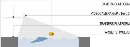 Schematic section of the pool and field of view of the video camera. The stimulus was a plastic ball (diameter 20 cm) attached to a pinnacle located to a fixed distance of 10 m from the starting position.