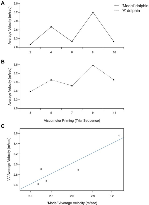 "Trial by trial average velocity (m/s) recorded from the model (upper panel, A) and ""A"" (lower panel, B) dolphins during a representative session (Day 1). (C) Linear relationship between average velocity exhibited by dolphins ""A"" and model for the visuomotor priming condition at Day 1."