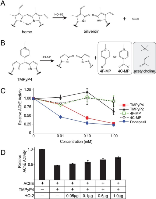 TMPyP4 inhibits AChE activity.A, oxidation of heme by Hemeoxygenase (HO) enzymes produces biliverdin and carbon monoxide. B, oxidation of TMPyP4 by HO enzymes is expected to generate either 4-formyl-1-methylpyridinium (4F-MP) or 4-carboxy-1-methylpyridinium (4C-MP). Both 4F-MP and 4C-MP have a structural resemblance to acetylcholine. C, fluorometric assay of AChE activity in presence of TMPyP2, TMPyP4, 4F-MP, 4C-MP and an established AChE inhibitor (Donepezil). D, pre-incubation of TMPyP4 with recombinant HO-2 prior rescued AChE activity in a concentration-dependent manner.