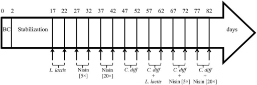 Time schedule of continuous intestinal fermentation during the different treatment periods. BC, bead colonization. Lactococcus lactis UL719 was added at final concentration of 109 CFU/mL in the reactor. Clostridium difficile ATCC43255 was added at a final concentration of 5 × 106 CFU/mL.