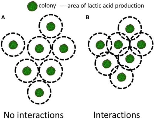 Representation of two situations of neighboring colonies. (A) When the production of lactic acid of one colony does not impact on its neighbors and (B) when the production of lactic acid of one colony does impact on its neighbors. Adapted from Malakar et al. (2002a) and Wimpenny (1992).