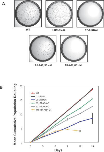 ARA-C Abrogates Anchorage-Independent Growth, a Hallmark of Oncogenic Transformation(A) ARA-C at 30 nM attenuates anchorage-independent growth as assessed by a soft agar assay and abrogates it at 60 nM as does shRNA against the EWS/FLI translocation.(B) ARA-C at 30 and 60 nM dosing decreases mean cumulative population doubling time by only 18% and 32%, respectively, at day 15. Error bars show the standard deviation across three replicates.