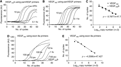 Quantification of mRNA expression of pan-VEGF and VEGFxxx isoform mRNA by Q-PCR. (A and B) Primers that detected all isoforms were used to detect increasing amounts of VEGF165b (A) or VEGF165 (B). (C) Standard curves for the two isoforms were the same indicating that a mixture of both could be assessed equally. (D) Amplification of VEGFxxx cDNA specifically. Primers specific to exon 8a resulted in amplification that was more than six orders of magnitude more sensitive for VEGF165 than VEGF165b (dotted line). (E) Standard curve using VEGF165 as a template.