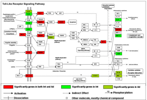 Over-representation of Toll-like receptor signaling pathway genes. Analysis of over-representation of differentially expressed genes in pathway from KEGG. The Toll-like receptor signaling pathway is illustrated with significantly regulated genes highlighted.