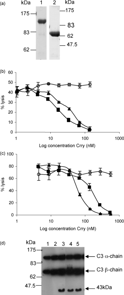 Inhibition of C by rCrry-Ig and sCrry. (a) rCrry-Ig was purified from cell culture supernatant by anti-Crry affinity chromatography and analysed by SDS-PAGE under non-reducing (7.5% gel; lane 1) or reducing conditions (10% gel; lane 2). (b) Antibody-sensitised erythrocytes were attacked with rat C and the ability of rCrry-Ig (■) and sCrry (▴) to inhibit CP-mediated haemolysis was compared with non-regulatory rat Ig (○). (c) Guinea pig erythrocytes were incubated with rat serum and the ability of rCrry-Ig (■), sCrry (▴) and rat Ig (○) to prevent AP-mediated haemolysis was determined. Each data point represents the mean value ±1S.D. of three determinations. (d) Methylamine inactivated C3 (C3MA) was incubated with fI in the presence of a cofactor: sCR1 (lane 3), rCrry-Ig (lane 4) or sCrry (lane 5). Ability of the reagent to act as cofactor was determined by SDS-PAGE on a 10% reduced gel followed by Western blotting. The blot was probed with anti-human C3c (cross-reactive with rat C3) followed by HRPO-conjugated anti-sheep Ig. Controls included C3MA only (lane 1) and C3MA with factor I (lane 2).