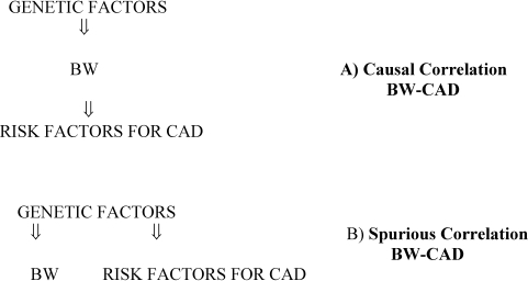 Relationship between BW and CAD