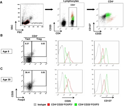 Treg and Tact are distinguished by a combination of several markers.(A) PBMC were electronically gated on lymphocyte population (left panel) followed by gate on total CD4+ cells (middle panel). CD4+ cells were analysed for the expression of CD25 and CD127 (right panel). (A–C) CD25+FOXP3+ cells were identified as Treg, whereas CD25+FOXP3− counted as Tact. A dot plot for one individual is shown for group 1 (B) and group 2 (C). Gating on Treg and Tact subsets was verified by further analysis of level of expression of CD25 (B–C, middle panel) and CD127 (B–C, right panel) expressed on Treg (red) and Tact (green). Gray line - isotype control.
