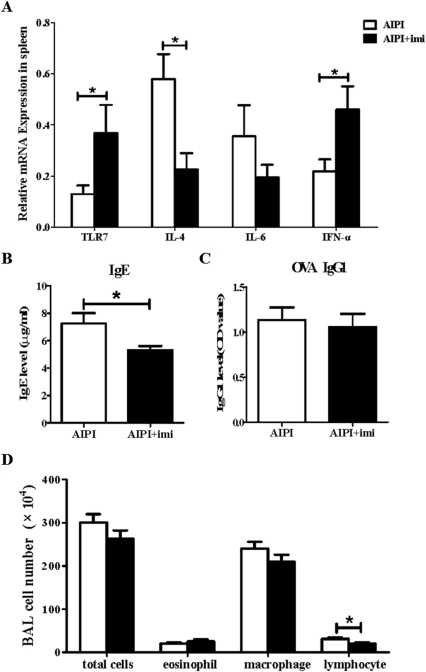 Assessment of various asthmatic parameters in TLR7 agonist stimulated AIPI rats.E3 rats were injected intraperitoneally with vehicle or TLR7 agonist on day 13 and 17 during the period of AIPI induction. The rats of AIPI group (n = 9) received 1 ml saline and the rats of AIPI+imi (imiquimod) group (n = 9) received 100 µg miquimod. TLR7 mRNA and cytokine mRNA expression levels in spleen were measured by QPCR (A). Levels of serum total IgE (B) and OVA-specific IgG1 (C) were measured by ELISA. Total cell numbers in BALF were counted under light microscope using a hemocytometer and values of macrophage, eosinophil and lymphocyte counts in BALF were expressed as the percentage of cell numbers of total cells (D). Results show as mean ±SEM from 9 rats in each group. *P<0.05; **P<0.01; ***P<0.001; significantly different from AIPI group.