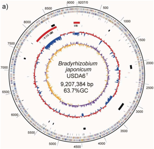 Schematic representations of circular replicons in B. japonicum strains. (a) USDA6T chromosome and (b) USDA110. The scale towards the outside of each map indicates genomic location (in kb). The bars in the outermost circle and the second circle show the positions of the putative protein-encoding genes in clockwise and counter-clockwise directions, respectively. The putative genes are represented by 18 colors, based on Clusters of Orthologous Groups (COG) assignments, as described in Supplemental Figure 1. The third circle from the outside indicates positions of structural RNA genes. In the fourth circle, the black bars indicate areas of putative genomic islands inserted in a tRNA gene. Three red bars within the fifth circle represent regions corresponding to the possible symbiosis island. The sixth circle shows the distribution of insertion sequences (ISs), as black bars. The innermost and second circles from the center show the GC skew values (yellow and purple) and the average GC percentage (blue and red), respectively, calculated using a window-size of 10 kb. This map was depicted using the GenomeViz program.