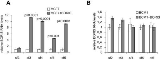 Upregulation of alternatively spliced BORIS transcripts in MCF-7 and BCM1 cells as determined by quantitative real time PCR. Changes in mRNA expression levels of BORIS isoforms sf2 to sf6 in MCF-7 (A) and micrometastatic breast cancer BCM1 cells (B), which were basal or transiently transfected with the expression plasmid containing the BORIS (sf1) sequence. The significant p-values are shown.