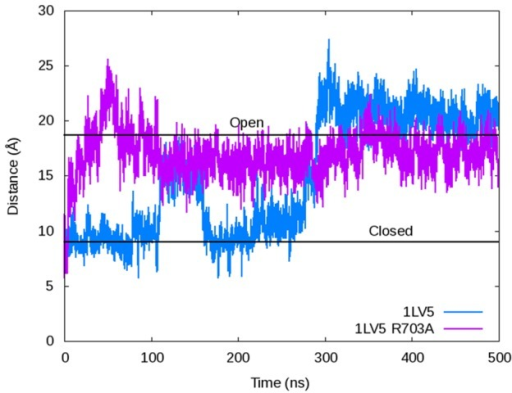 The O-helix distance as measured by the α-C distance between Arg629 and Pro699 depicting the opening of the fingers domain for the wild-type 1LV5 (blue) and R703A mutant (purple) simulated using Desmond and the Charmm27 force field.The plot shows the mutant reaching the open conformation in <50 ns, while the wild-type does not open fully until ∼290 ns.