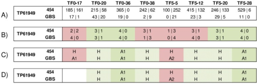Example of comparison of GBS and 454 sequencing of TP61949 in eight plant samples.A) GBS and 454 read counts of each allele (A1/A2); B) predicted tetraploid allelic ratios (convergent ratios in green and discordant ratios in red); C) bi-allelic predicted genotype (A1, A2 and H) before genotype-level filtration and D) after genotype-level filtration of GBS data for minimum read counts (11 reads for homozygous genotypes, 2 reads of each allele for heterozygous genotypes, 0.1 as minimum minor allele frequency). Genotype calls showing concordance (green), discordance (red for GBS homozygotes and orange for GBS heterozygotes) with both sequencing methods or that are missing (white) before and after genotype-level filtration for minimum read counts. A complete representation of validation results for 14 SNP loci in eight plant samples is provided in S3 Fig.