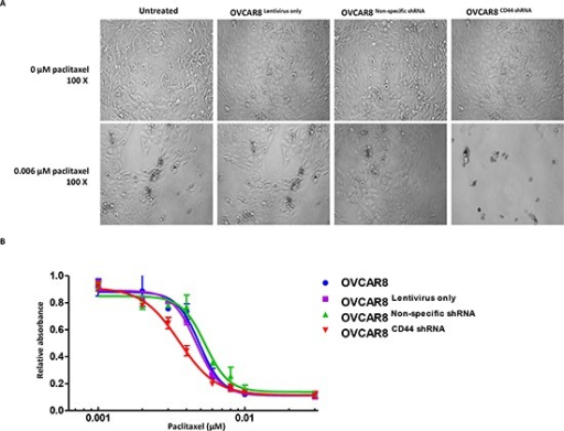 Knockdown of CD44 by lentiviral shRNA increased the paclitaxel sensitivity of ovarian cancer cellsPanel (A) status of OVCAR8, OVCAR8Lentivirus only, OVCAR8Non-specific shRNA, and OVCAR8CD44 shRNA cells that differed between representative concentrations of paclitaxel (0 μM and 0.006 μM). Panel (B) MTT assay showing cell viability of the above mention four cell lines with different concentrations of paclitaxel. The MTT assay was conducted in triplicate.