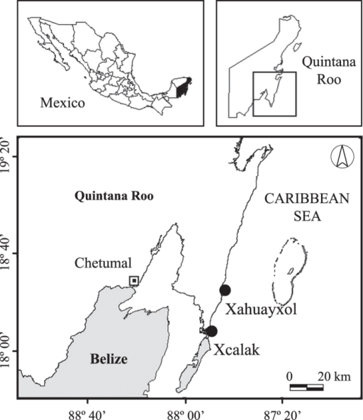 Study sites in the southern part of Quintana Roo, Mexico.The study sites are located in reef lagoon environments at Xcalak and Xahuayxol (black circles). This figure was made using GIS software (ArcView 3.3) and Adobe Illustrator CS4.