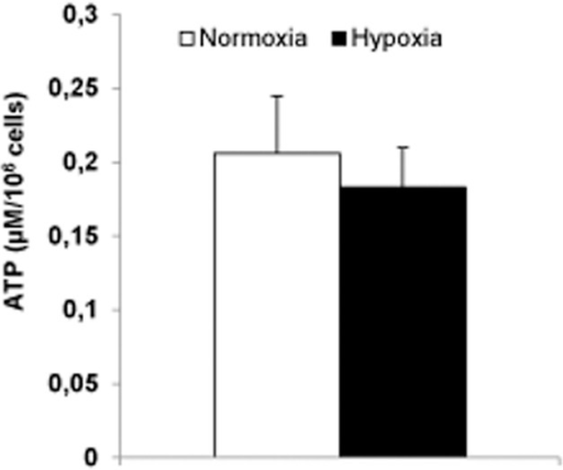 Previous hypoxia (8 hours) failed to affect levels of ATP in INS-1 832/13 cells.Cells were cultured in RPMI with 11 mM glucose. Data are mean ± SEM based on five separate experiments (three parallels per experimental condition).