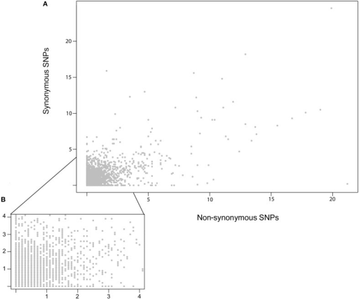 Relationship of Synonymous vs. Non-synonymous SNP frequencies. (A) An X/Y scatter plot showing the frequency of Synonymous vs. Non-synonymous SNPs per 10 kb bins. The x and y axis show the fraction of SNPs per kb for each window. No significant correlation was found using either pearson or spearman rank. (B) A zoomed in view of (A), focused on the regions up to four polymorphisms per kb per 10 kb bin.
