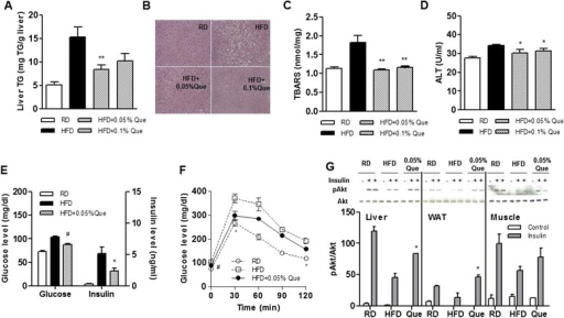Effect of quercetin on hepatic lipid accumulation and glucose tolerance in HFD-fed obese mice. C57BL/6 mice were fed a regular diet (RD), a high-fat diet (HFD), an HFD supplemented with 0.05 % quercetin (HF + 0.05 % Que) or 0.1 % quercetin (HFD + 0.1 % Que) for 9 weeks (n = 6 per group). a Liver tissues were collected and their TG content was determined. b Representative images of hematoxylin and eosin stained tissue. Original magnification, 200 ×. c Hepatic TBARS levels as a marker of lipid peroxidation. d Plasma alanine aminotransferase (ALT) levels. Data are mean ± SEM of six mice per group. *p < 0.05, **p < 0.01 versus HFD. e Fasting glucose and insulin levels. f Oral glucose tolerance test. Mice were fasted 12 h before receiving by mouth a 20 % glucose solution at a dose of 2 g/kg, and blood samples were taken at the indicated times. Levels of glucose were measured using the glucometer. Data are mean ± SEM of six mice per group. *p < 0.05, # p < 0.005 versus HFD. g Insulin responses. After fasting 5 h, mice were stimulated with or without insulin for 4 min. Expression of p-Akt, and Akt proteins in the liver, adipose tissue, and skeletal muscle of each mouse (n = 4 per group) were examined by Western blot analysis using the indicated antibodies. Data are mean ± SEM of four mice per group. *p < 0.05 versus HFD