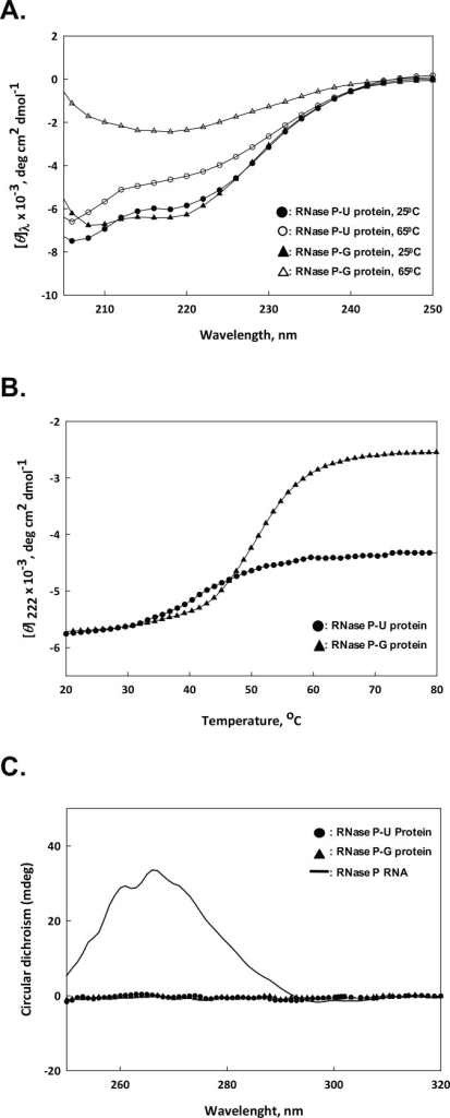 CD spectroscopy of RNase P protein components.A. Far-UV CD spectra of the two protein preparations from 205–250 nm at different temperatures. B. CD profile of RNase P-U protein and RNase P-G protein within the temperature range of 20–80°C. C. Near-UV CD spectra of RNase P RNA (2 μM), and RNase P-U protein and RNase P-G protein (12 μM each) within 250–320 nm.