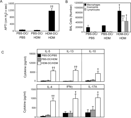 Adoptive transfer of mDCs to resistant mice induces AHR and IL-17 production similar to that seen in susceptible animals.C3H mice were sensitized with PBS-, or HDM-pulsed bone marrow-derived DCs on day 0. Mice were challenged with HDM or PBS on day 14 and sacrificed 72 hours later. AHR (A) and BAL cell composition (B) were examined at sacrifice. Lung cells were also stimulated with HDM in vitro, and cytokine production was assayed by ELISA (C). † and †† indicate significant differences (p<0.05 and p<0.001 respectively) compared to PBS-treated animals or PBS-pulsed DCs.
