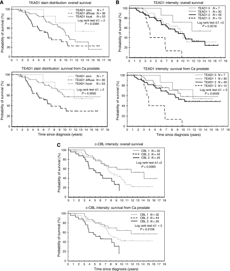 Kaplan–Meier curves. Kaplan–Meier analysis of overall and disease-specific survival for prostate cancers stained for TEAD1 (A and B) and c-Cbl (C). TEAD1 staining scored for either distribution (A) or intensity (B).