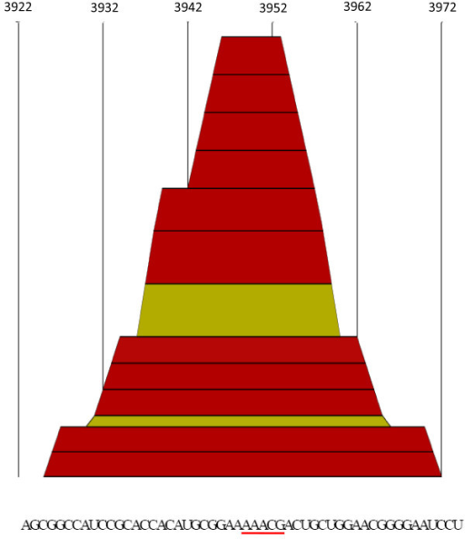 """Mountain plot"" of a NoV ORF1 sequence region with an entrophy equals to zero. A mountain plot representing a secondary structure in a plot of height versus position is shown. Sequences from positions 3922 through 3973 of the alignment are shown at the bottom of the figure. Numbers at the top of the figure show site position in the alignment. Colors correspond to the Vienna RNA conservation coloring schema [16] (see also Fig. 3). Note that the AAACG motif (underlined in red) is predicted to be located in a loop of the secondary structure."
