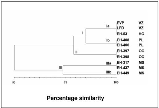 Dendrogram constructed from the molecular profiles. Genetic similarity among Histoplasma capsulatum isolates from Veracruz (VZ) with isolates from other neighboring endemic zones, in Mexico.