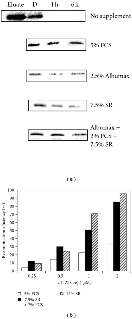 Effect of media supplements on the stability of cell-permeant Sox2-TAT fusion protein and efficiency of protein delivery. (a) Ability of media supplements to stabilize Sox2-TAT. Fetal calf serum (FCS), Albumax, and serum replacement (SR) were added to the eluate fraction and subsequently dialyzed against DMEM-F12 media. Depicted are anti-Sox2-immunoblots of the dialysis fraction (D) and a stability test of samples being taken after 1 hour (1 h) and 6 hours (6 h), respectively. (b) Influence of FCS, SR, and a combination of both on the transduction efficiency. Protein transduction efficiencies were analyzed by quantifying the recombined cells after delivery of cell permeant Cre-protein (TAT-Cre) into the CV1-5B Cre reporter cell line. Cells were treated with different concentrations of TAT-Cre (0.25 μM–2 μM) in transduction media supplemented with either 15% serum replacement, 5% FCS, or mixture of 2% FCS and 7.5% SR. To determine the recombination activity, cells were fixed and stained for β-galactosidase activity after 48 hours. Cre protein transduction and quantification of recombination in Cre reporter cells was performed as described previously [35].