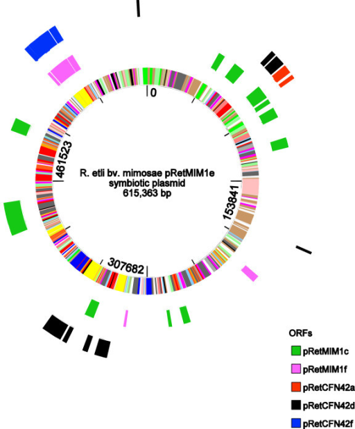Graphic comparison of the Mim1 symbiotic plasmid pRetMim1e compared to other rhizobial replicons.