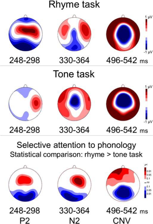 Selective attention to phonology modulates P2, N2, and CNV components. Top two panels show voltage maps (all 129 electrodes in a planar projection) of TANOVA-defined time-windows where significant (fdrp < 0.05) rhyme greater than tone task differences emerged. Bottom panel shows the topography of the effect of selective attention to phonology in these averaged time-windows.