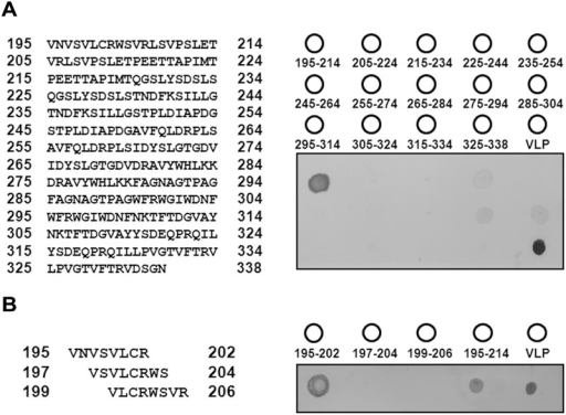 Epitope identification through dot-blotting with synthetic peptides.(A) Left: sequences of the 20-mer synthetic peptides from 195 to 338 aa; each peptide had a 10-mer amino acid overlap with the following peptide. Right: schematic of the peptide array on the PVDF membrane. Virus-like particle (VLP, 1–338 aa) was used as a positive control. Dot-blotting of the 20-mer peptide was performed using RG-M18 mAB. (B) Fine mapping of 8-mer synthetic peptides from 195–206 aa (left). All the assays were performed in triplicate (right).
