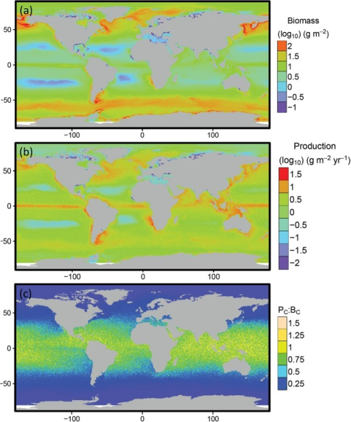 Predicted spatial distributions of consumer biomass and production.Predicted global distribution of (a) consumer biomass, (b) production and (c) the consumer production: biomass ratio for individuals of body mass 1 to 106 g. Areas in white, predominantly in the southern ocean, are marine areas not included in the GCM domain.