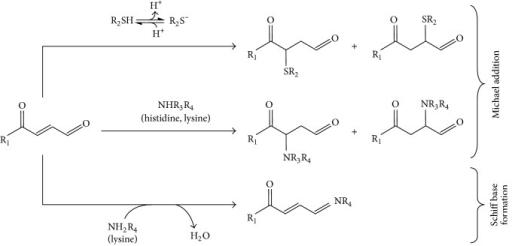 Reaction scheme of electrophilic lipid derivatives. Electrophilic α,β-unsaturated ketone moieties react with nucleophilic residues on target proteins (thiolates of cysteines and amino groups of histidine and lysine) via Michael reaction. In the case of bifunctional electrophiles, the aldehyde group reacts with primary amines of lysine generating Schiff base adducts.