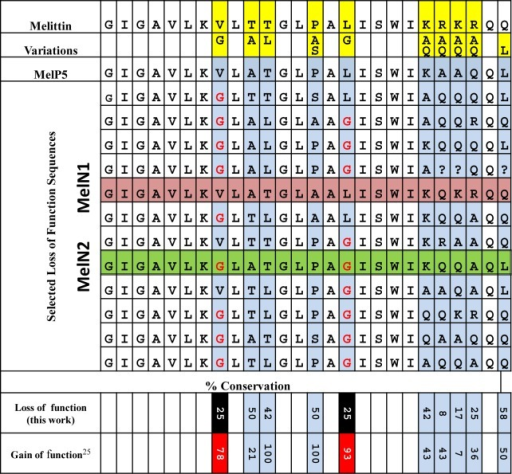 Sequences of peptidesidentified in the screen: top line, melittin,from which the library was designed; second line, residue variationsin the combinatorial peptide library; and third line, MelP5, the bestgain-of-function sequence identified by us in another screen.25 The loss-of-function sequences were determinedby Edman degradation using 12 randomly selected negative library members.Blue columns are varied residues. Red amino acid codes represent changesin residues that were conserved in gain-of-function sequences. Redand green rows highlight two peptides tested for activity. In termsof the changes to glycine at sequence positions Val 8 and Leu 16,MelN1 is atypical, while MelN2 is typical. The bottom two rows showthe % conservation of native residue in the loss-of-function screen(this work) and the gain-of-function screen.25