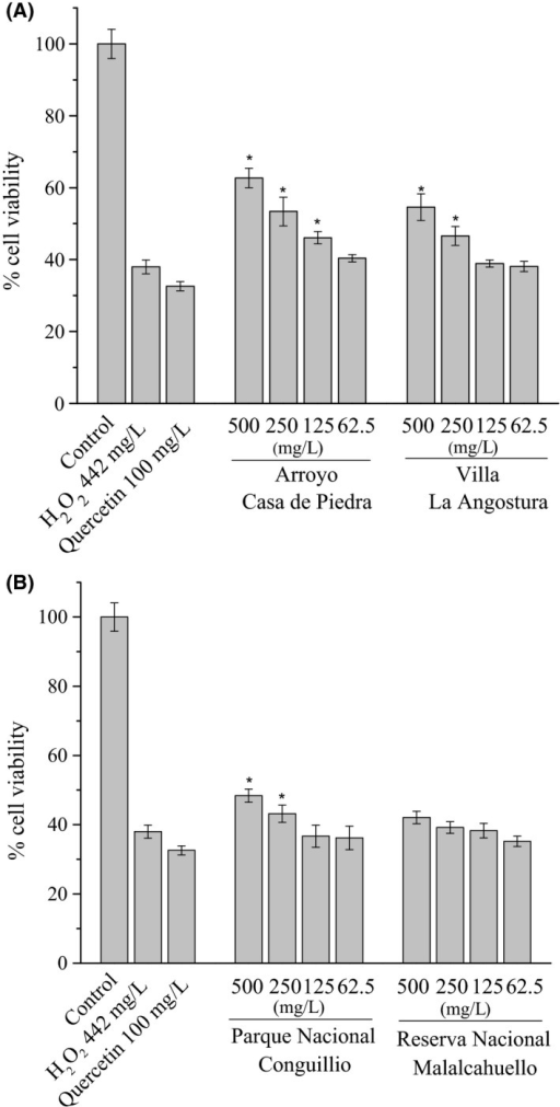 Cytoprotective effect of Ribes magellanicum PEEs against H2O2‐induced oxidative stress on AGS cells. (A) Argentinean samples, (B) Chilean samples. The cell viability was determined by MTT reduction assay. Results are expressed as means ± SD (n = 5). *P < 0.05 compared to H2O2 controls.