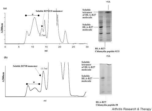 Gel filtration and gel electrophoresis of refolded HLA-B27/Chlamydia peptide monomers loaded with Chlamydia peptide 133 (a) and with Chlamydia peptide 8 (b). The peaks eluted at 13.7 ml contained the soluble MHC monomer. The amount of refolded HLA-B27 monomer with Chlamydia peptide 8 (b) was higher than that of peptide 133 (a) with less protein aggregation (proteins eluted between 7 and 13 ml), indicating that peptide 8 has a higher binding affinity for HLA-B27. The SDS-PAGE in (a) and (b) shows that both eluted monomers are the major protein in the eluted fraction and that most soluble monomers bind to streptavidin if added. In both experiments the amount of protein aggregation was higher than refolding of HLA-B27 with a viral epitope, indicated by a greater amount of eluted proteins between 7 and 13 ml (Fig. 1). A280, absorption at 280 nm; asterisks, protein aggregates; SA, streptavidin.