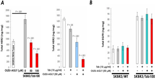 A. Exogenous supplementation with oleuropein aglycone down-regulates HER2 expression and synergistically enhances trastuzumab-induced depletion of HER2 in trastuzumab-resistant SKBR3/Tzb100 cells. Overnight serum-starved SKBR3/Tzb100 cells were cultured in DMEM-0.1% FBS supplemented with increasing concentrations of oleuropein aglycone in the absence or presence of trastuzumab for 72 h. The Oncogene Science HER2 microtiter ELISA was used according to the manufacturer's instructions to compare HER2 concentrations in cell pellets. B. Oleuropein aglycone treatment does not affect EGFR (HER1) expression in trastuzumab-sensitive SKBR3 parental cell line (SKBR3/Wild Type) and in its derivative trastuzumab-resistant SKBR3/Tzb100 pool. Overnight serum-starved SKBR3/Tzb100 cells were cultured in DMEM-0.1% FBS supplemented with increasing concentrations of oleuropein aglycone in the absence or presence of trastuzumab for 72 h. The Oncogene Science HER1 (EGFR) microtiter ELISA was used according to the manufacturer's instructions to compare HER1 concentrations in cell pellets. Results in A and B are means (columns) and 95% confidence intervals (bars) of three independent experiments made in triplicate. Statistically significant differences (one-factor ANOVA analysis) between experimental conditions and unsupplemented control cells are shown by asterisks (* P < .01, ** P < .001). All statistical tests were two-sided.