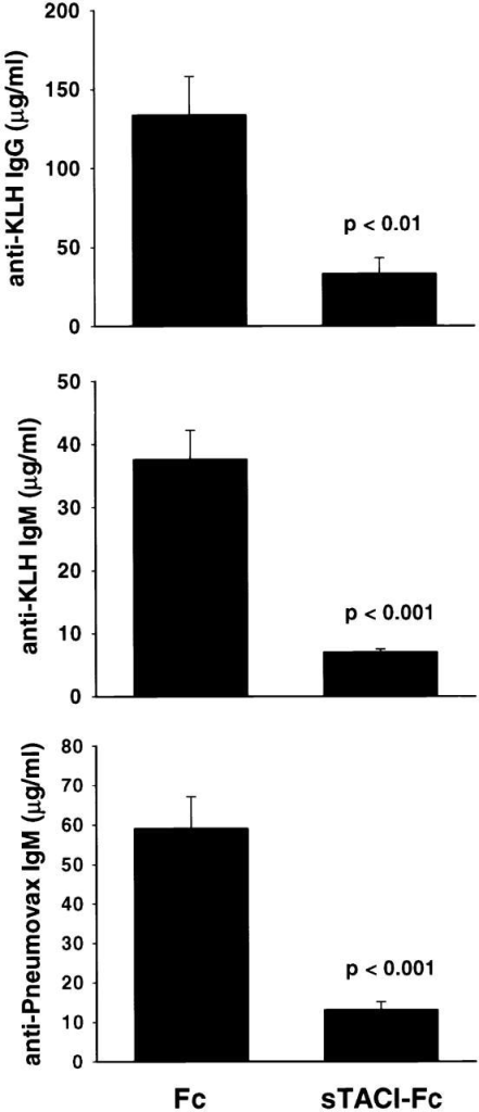 Soluble TACI-Fc fusion protein inhibits anti-KLH and anti-Pneumovax antibody production. Mice (n = 7) were treated with 5 mg/kg TACI-Fc fusion protein or nonfused Fc protein each day for 7 d. Serum levels of anti-KLH IgG and IgM and anti-Pneumovax were measured on day 7 by ELISA.