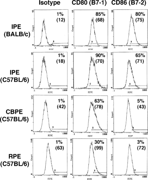 Detection of B7 molecules on cultured PE cells by flow cytometry. IPE (BALB/c and C57BL/6), CBPE (C57BL/6), and RPE cells (C57BL/6) were cultured on 6-well plates for 14 d. Thereafter, the confluent cells were triturated several times through 21-gauge and then 23-gauge needles to create a single cell suspension. PE cells were incubated with FITC-conjugated antibodies: anti-CD80, anti-CD86, or purified hamster IgG as isotype control for 1 h at room temperature. After washing and fixation, the cells were analyzed by flow cytometry. Percentages in upper right corners indicate positive cells. Number in parenthesis indicate mean fluorescence index.