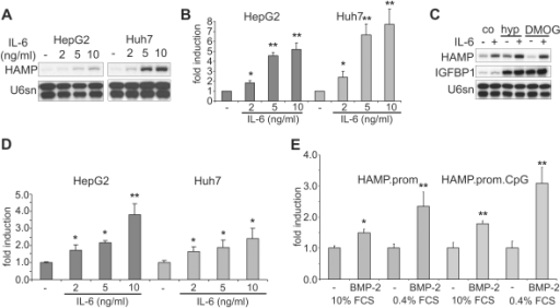 Transcriptional induction of hepcidin expression by IL