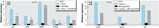 Effect of MAA on estrogen-mediated endogenous gene expression in vitro and in vivo. (A) MCF-7 cells were pretreated with either vehicle [ethanol (EtOH)] or 5 mM MAA for 2 hr and then treated for 18 hr with either vehicle or 1 nM E2. The expression of endogenous estrogen-responsive genes was analyzed by real-time PCR. Data represent the average fold over control (± SE) of duplicate samples from at least three independent experiments. (B) Mice were pretreated for 30 min with either saline or 400 mg/kg MAA and then treated with either vehicle or 1 μg/kg E2 for 2 hr. Uteri were collected and estrogen-responsive gene expression was analyzed by real-time PCR. Data represent the average fold over control (± SE) obtained from three mice per treatment.#p < 0.01 compared with 1 nM E2 alone.