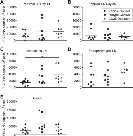 FIV proviral load in tissues is unaffected by anti-CD25 mAb treatment.(A–B) Provirus in popliteal lymph nodes was quantified on days 14 and 35 p.i. (C–E) Provirus in mesenteric and retropharyngeal lymph nodes and spleen was quantified on day 54 p.i. * indicates p<0.05.